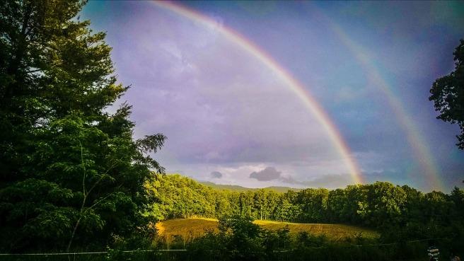 forest, double rainbow